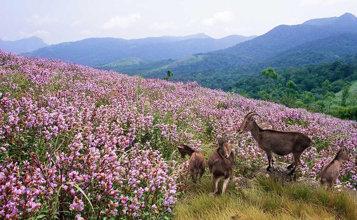 Eco-tourism destinations set to woo back visitors