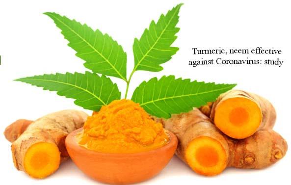 Turmeric, neem effective against Coronavirus: study