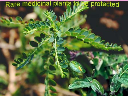 Govt to protect rare medicinal plants; to initiate Germplasm conservation