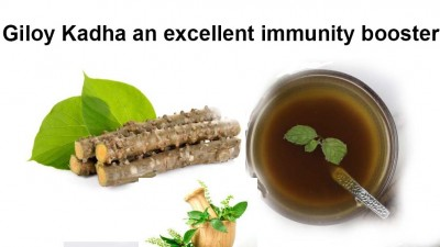 Make immunity booster 'Giloy Kadha' at home