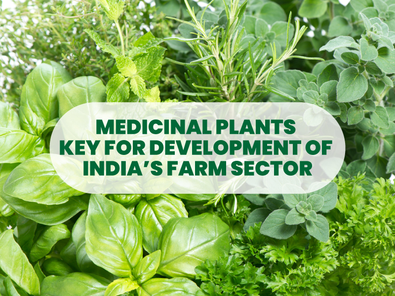 'Medicinal plants key for development of India's farm sector'